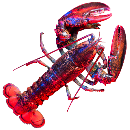 LobsterRed-CutOut.png